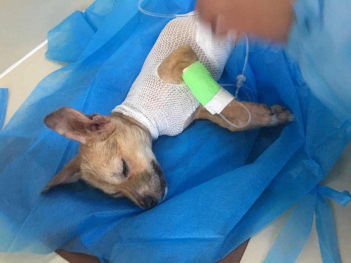 rescue-puppy-skin-fungus-mia-china-19