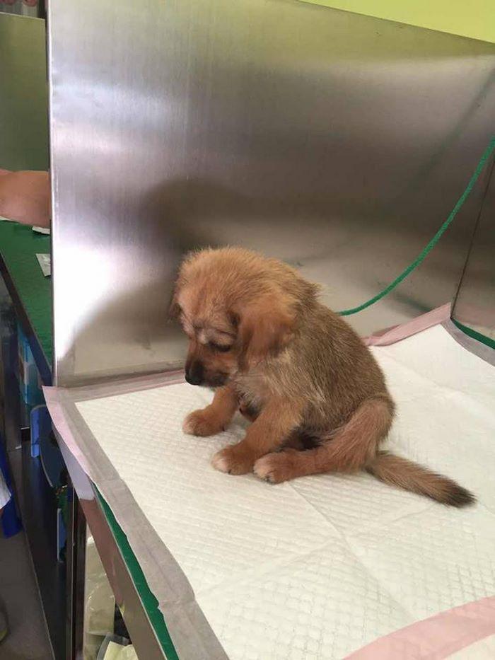 rescue-puppy-skin-fungus-mia-china-20