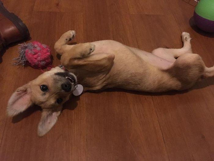 rescue-puppy-skin-fungus-mia-china-23