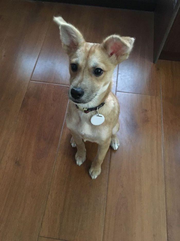 rescue-puppy-skin-fungus-mia-china-24