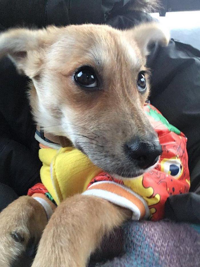 rescue-puppy-skin-fungus-mia-china-28