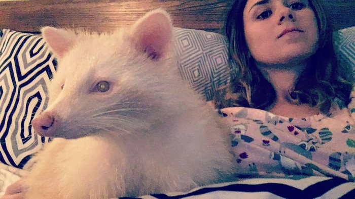 rescued-albino-raccoon-maxine-baird-new-hope-7