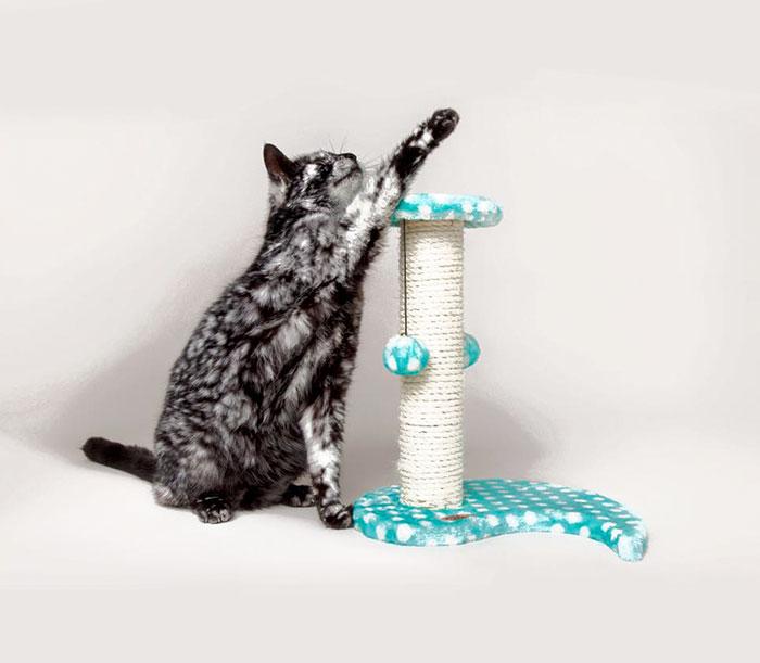 senior-black-white-cat-vitiligo-scrappy-5