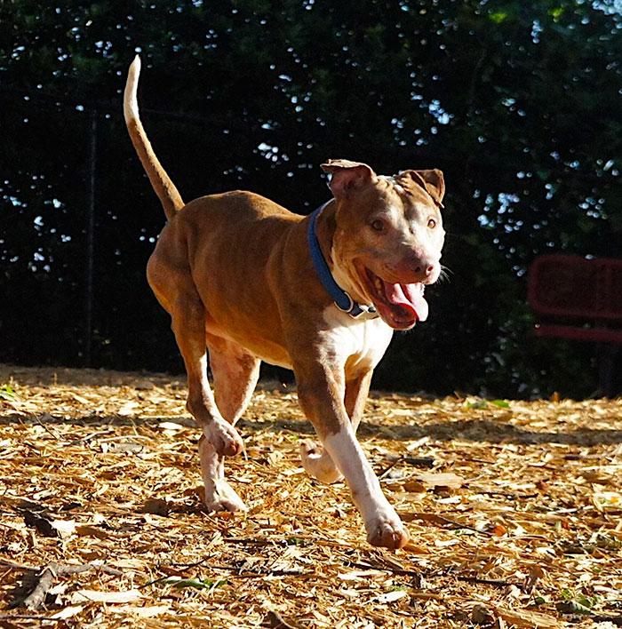senior-shelter-dog-holiday-adoption-boss-5