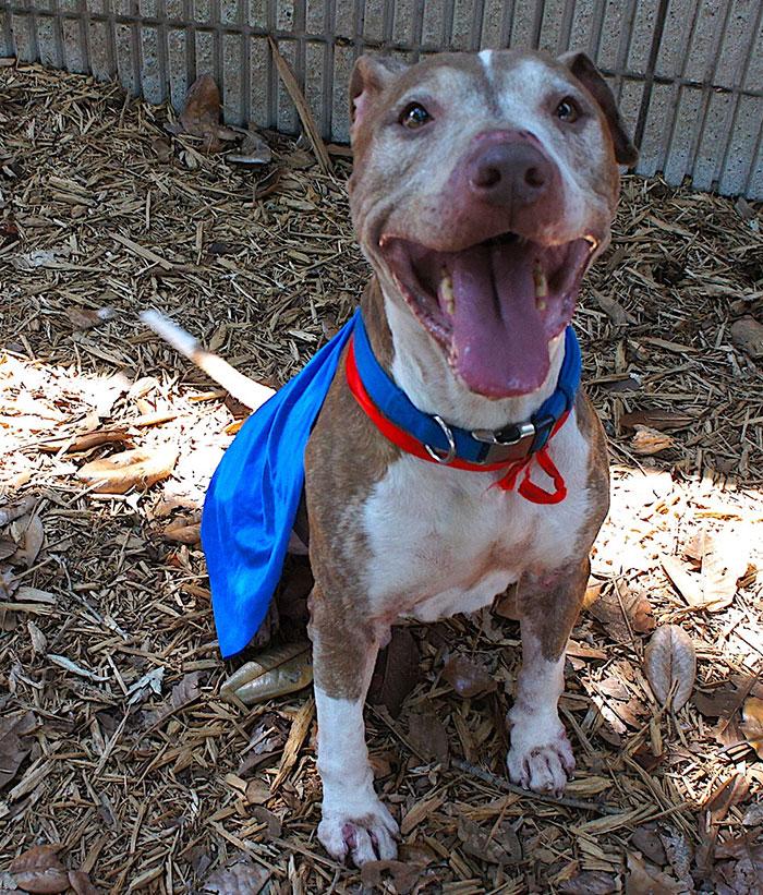 senior-shelter-dog-holiday-adoption-boss-7