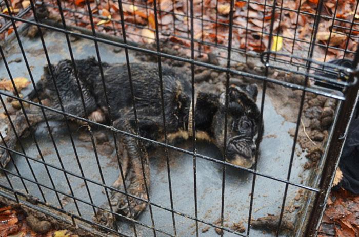 starved-dog-left-die-crate-sophie-5