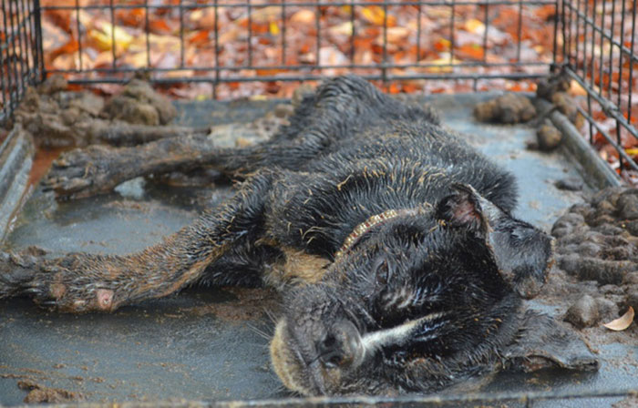 Dying Dog Found Locked Up In A Crate All Covered In Feces Gets Completely Transformed By Love
