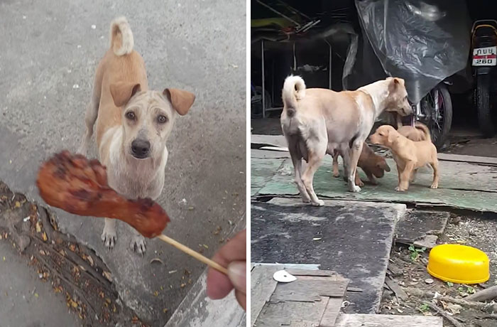 Man Gives Starving Dog Some Food, But She Refuses To  Eat, So He Decides To Follow Her