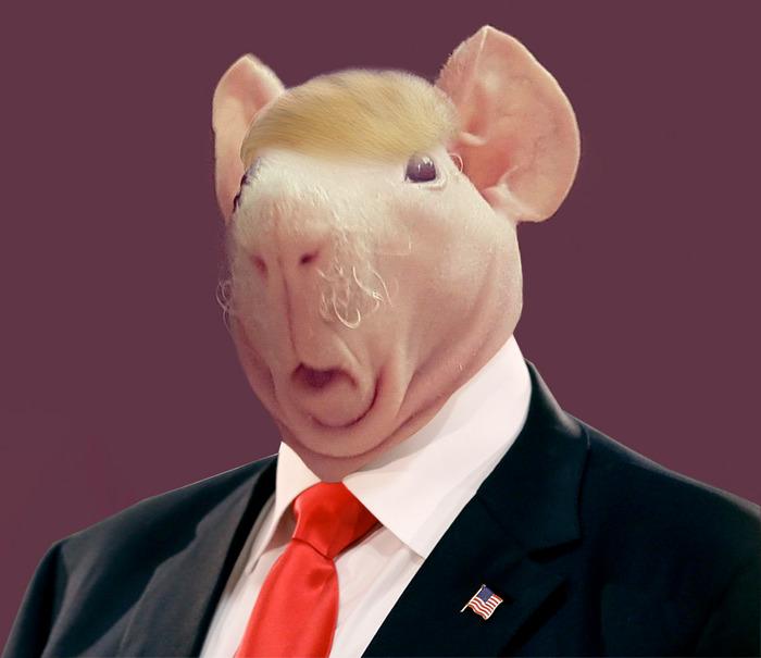 Pig Elect