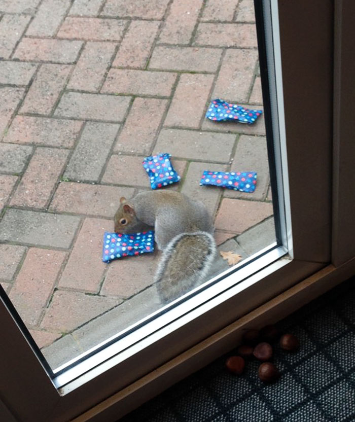 tiny-christmas-presents-squirrels-dad-3
