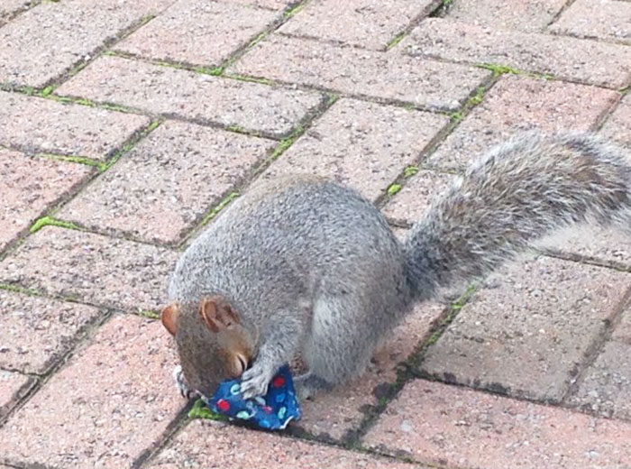 tiny-christmas-presents-squirrels-dad-4