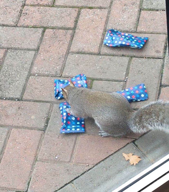 tiny-christmas-presents-squirrels-dad-5