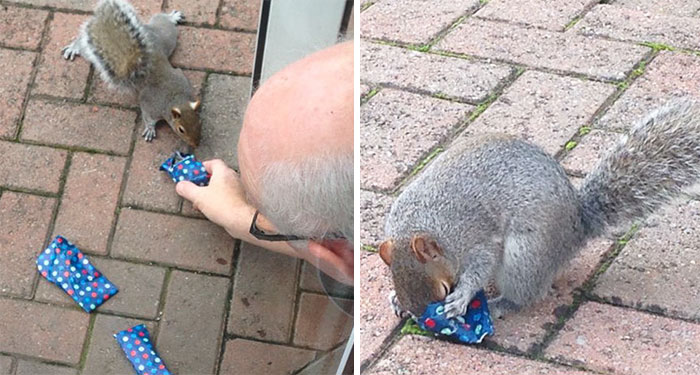 This Dad Wrapped Tiny Christmas Presents For Squirrels, And The Internet Can't Handle It