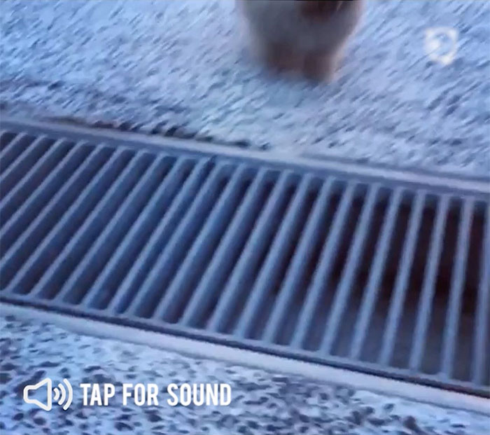 Epic Leap Of Tiny Puppy