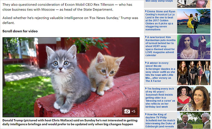trump-chrome-extension-make-america-kittens-again-8