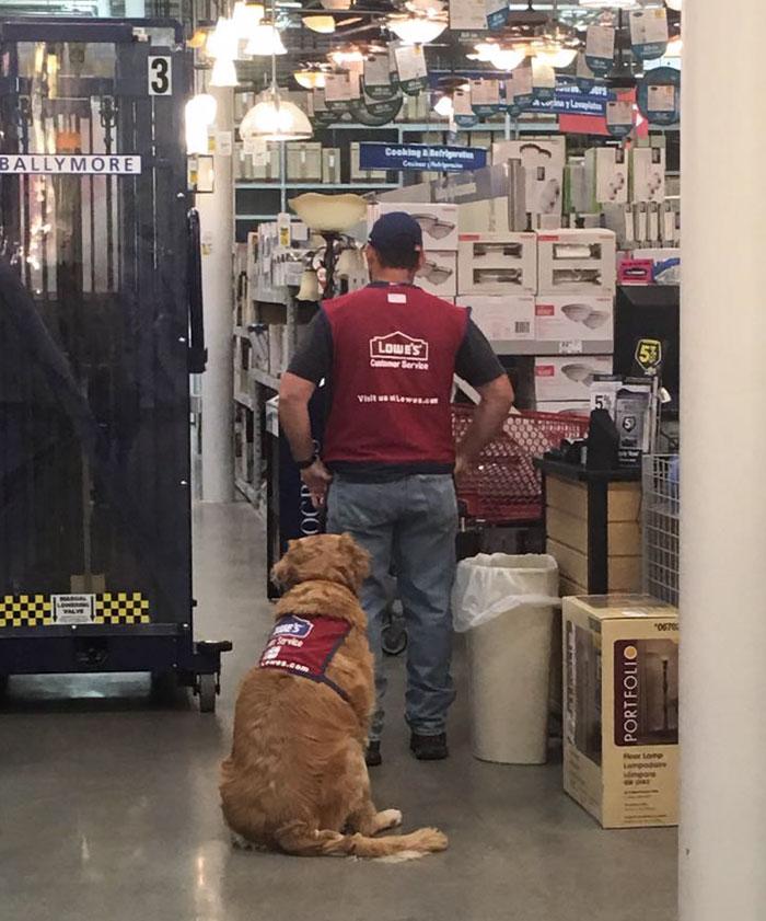 veteran-dog-hardware-store-lowe-1