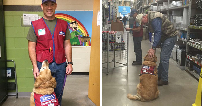 A Veteran Who Needs A Service Dog Was Struggling To Find A Job, Until This Store Employed Them Both