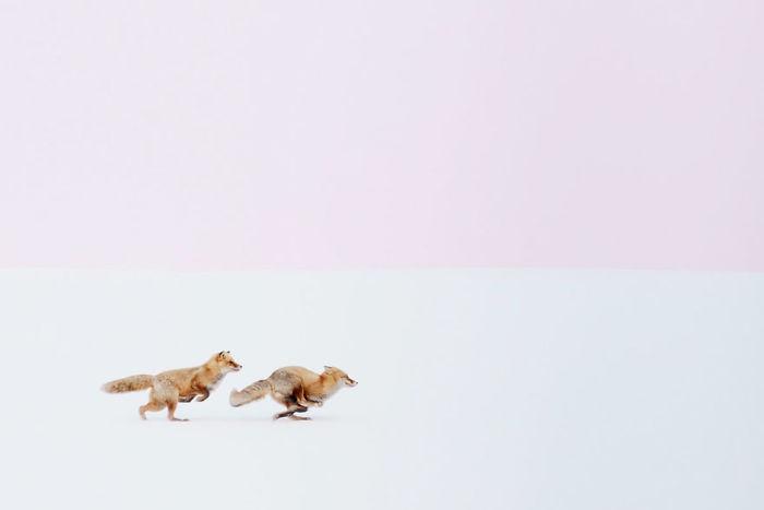 Winter Fox Photography