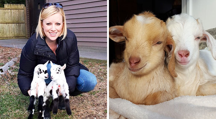 Woman Quits Stressful City Job To Raise Special Needs Baby Goats, Loves Every Minute Of It