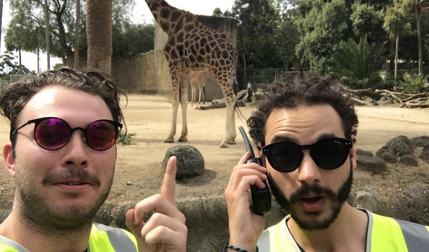 zoo-in-a-hi-vis
