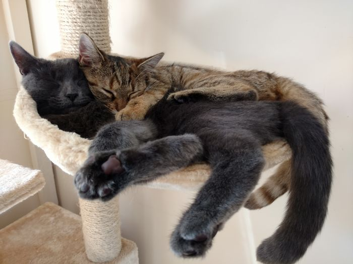 Facts About Cats' Sleeping Habits