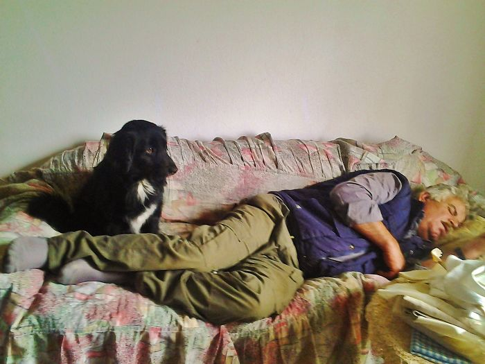 """don't Let Him On The Couch"" He Said…""it Is Not For Dogs"" He Said…"