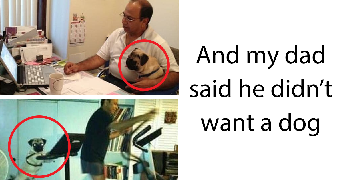 245 Dads Who Didnt Want The Damn Dogs In Their Lives