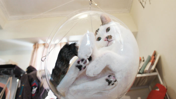 Transparent Bubble Chair That We Created For Cats