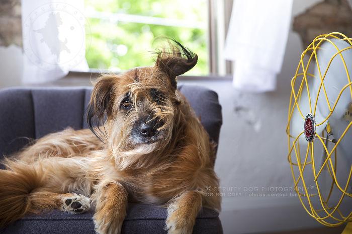 Roxy, A Rescue Of Unknown Breed
