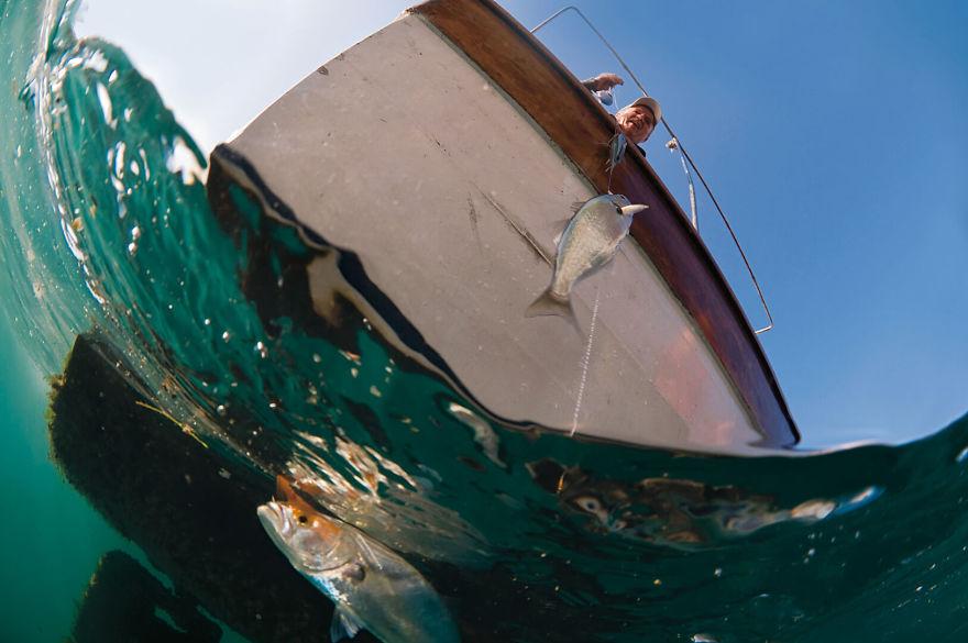 Fisherman & Young Bluefish