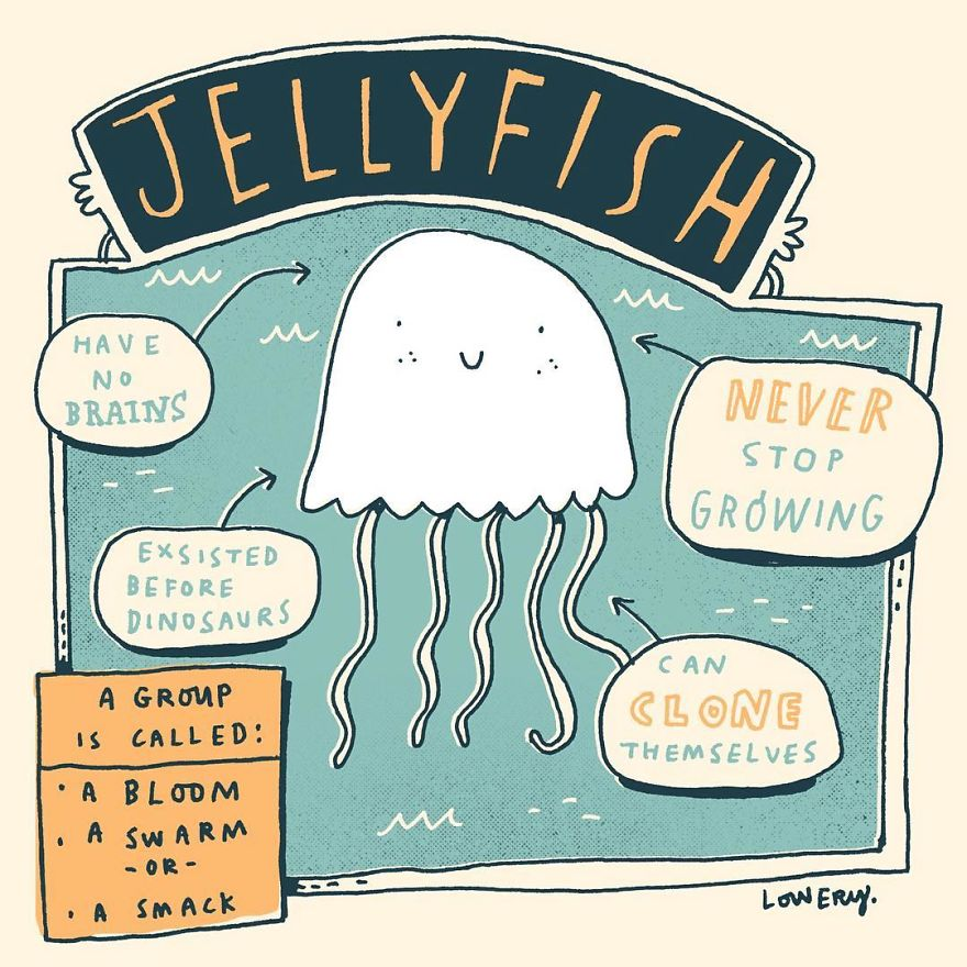 Daily Illustrated Random Facts