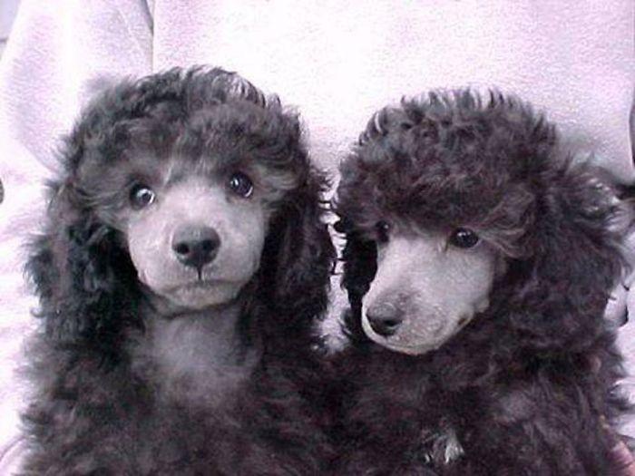 Doggelgängers