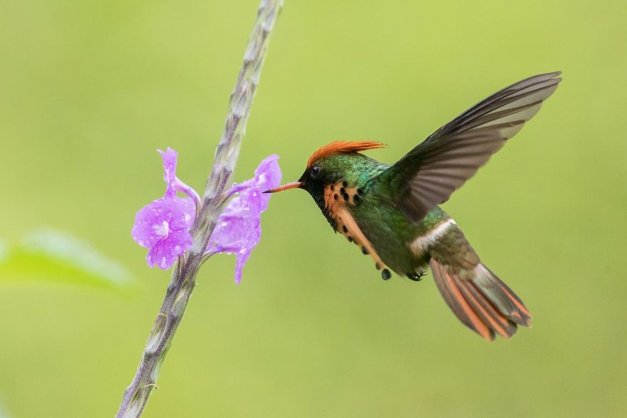 I Visited The Caribbean To Shoot Hummingbirds