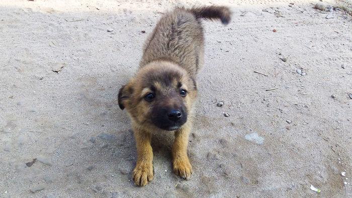 Neighbour Dog Tito