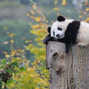 Too Lazy To Care 🐼
