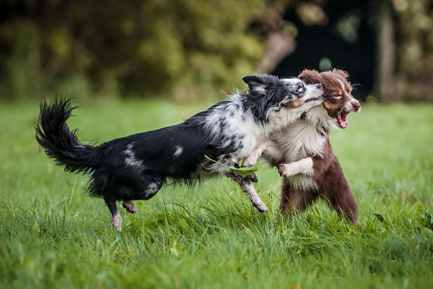 I'm Passionate About Canine Action And Portrait Photography