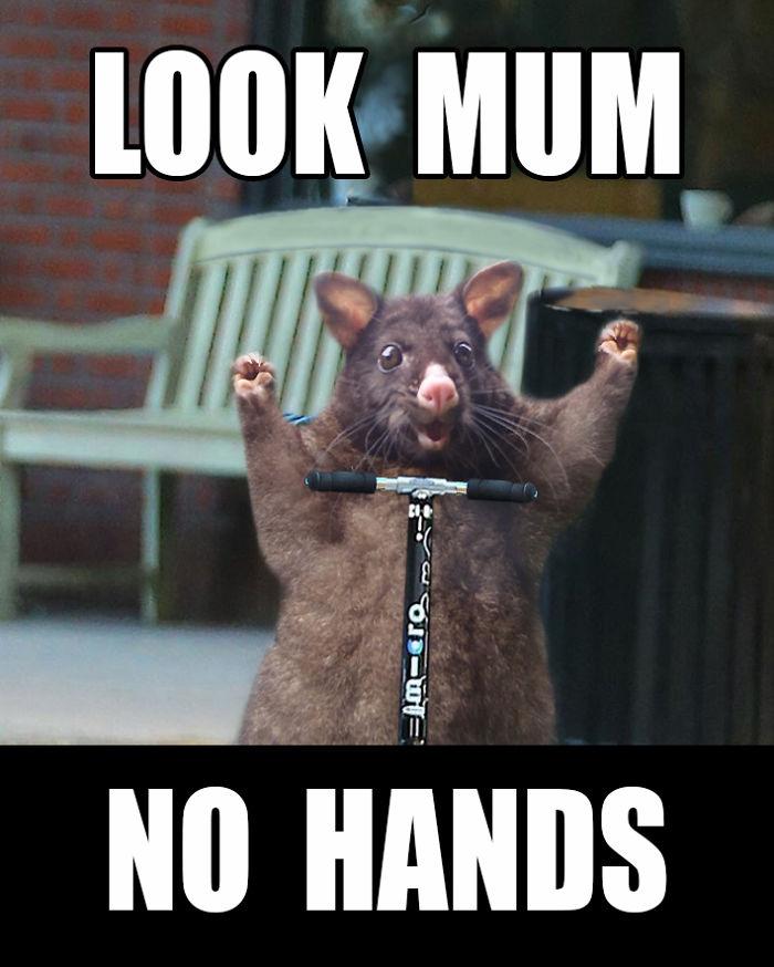 Look Mum . . .