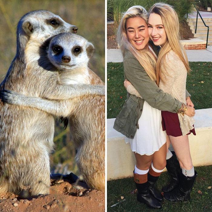 Sorority Girls Pose Like Meerkats