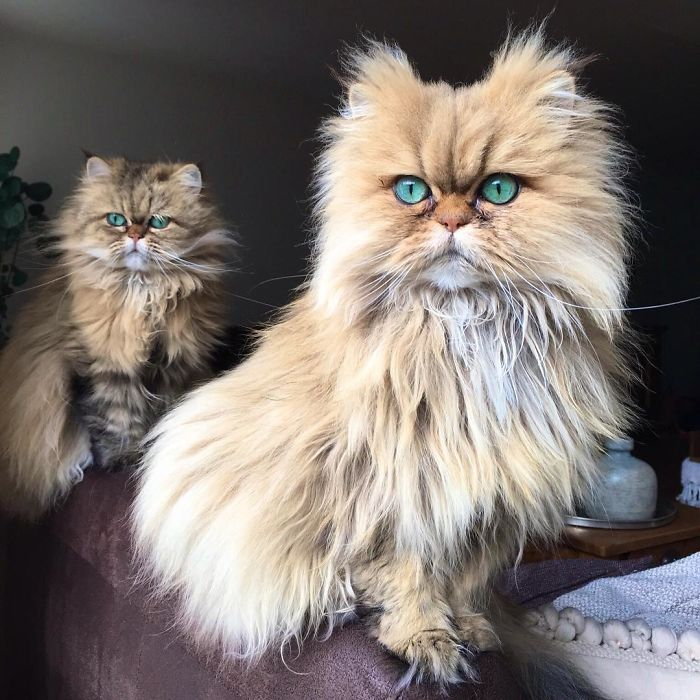 Two Dutch Ladies Who Can Look Right Into Your Soul!