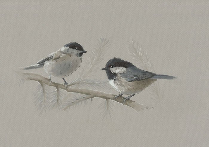I Draw Austrian Birds