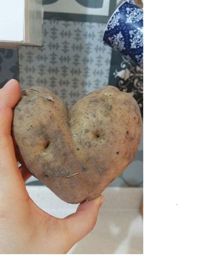 Potato Love,