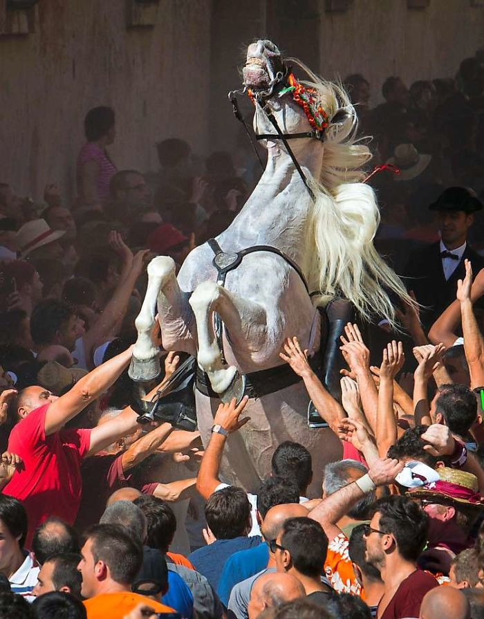 A Horse Rears In The Crowd