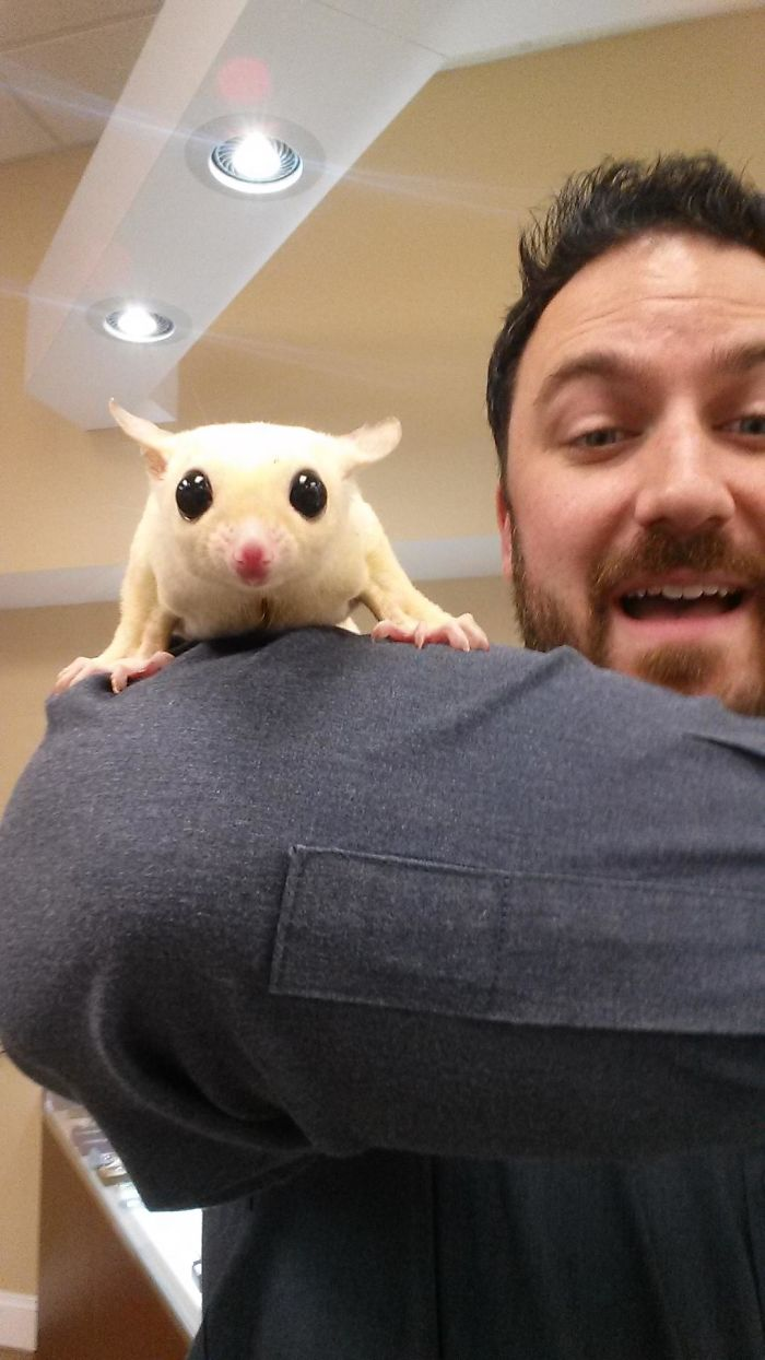 Took A Sugar Glider Selfie Today. This Is A Split Second Before He Jumped From My Arm And Perched Himself Atop My Phone. Meet Dmitri!