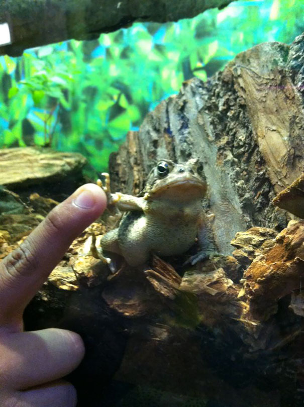 Gangsta Toad Is Angry