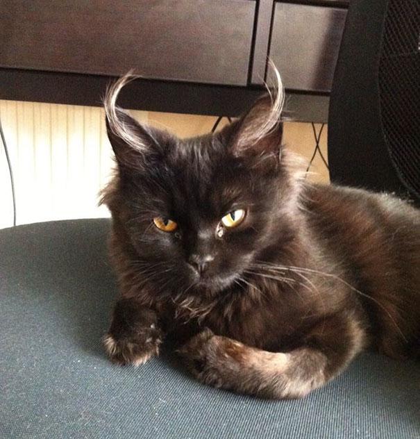 I'm Pretty Sure That My Kitten Is The Devil