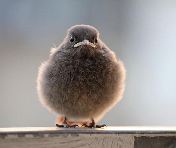 Little Angry Bird