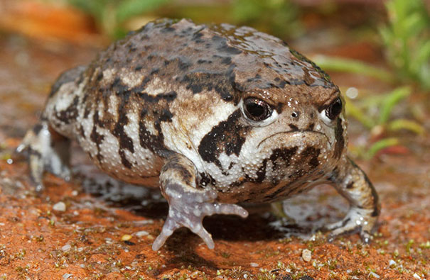 I See A Lot Of Grumpy Cat, How About Grumpy Toad