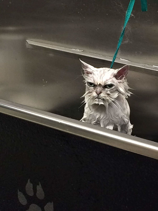 My Friend Is A Pet Groomer And Had A Very Angry Customer