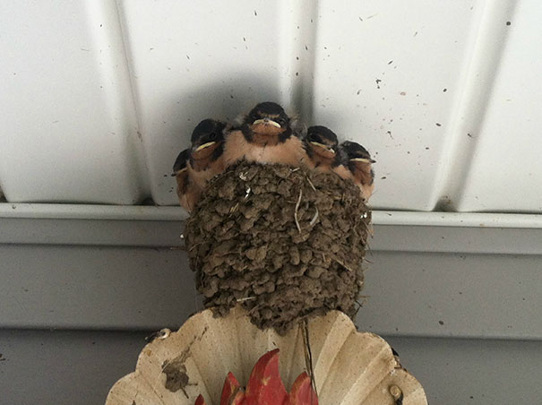 Angry Baby Birds