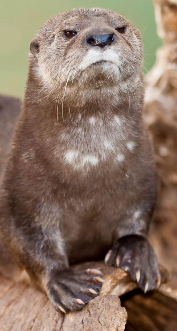 This Otter